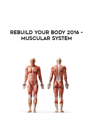 Rebuild Your Body 2016 - Muscular System by https://lobacademy.com/